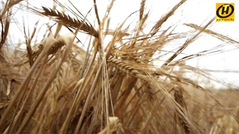 Хлебные места Беларуси. Зарплата 900 BYN и 7 лет работы инженером в сельхозе