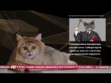 News Mews #1.99. Reels, загадка и логотип выборов