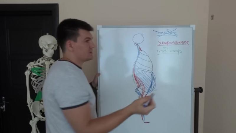 Вторая серия. Биомеханика движений и связь мышц.