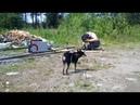 Коля делает секции для забора, что бы можно было выпускать собак побегать без поводка