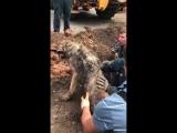 Сотрудники МЧС Ленобласти спасли пса, которого засыпало в яме, выкопанной у дороги рабочими.