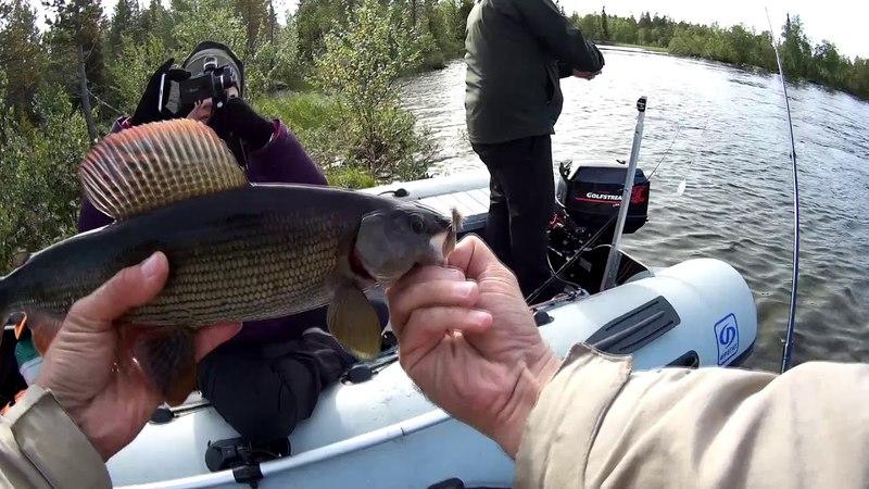 Кольский хариус. Рыбалка на Кольском август 2017