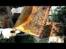 Объединение пчело семей и роёв перед главным медосбором через газету