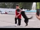 Пёс спас фотографию