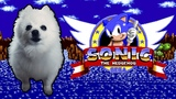 SONIC - 'GREEN HILL ZONE' em CACHORR