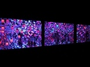 В Токио открылся потрясающий интерактивный музей цифрового искусства