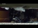 Адская кошка 06 На тропе войны Реальное ТВ животные фелинология 2011
