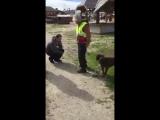 Хозяин потерял собаку 2 года назад, она не помнит как выглядит хозяин, но узнала по запаху