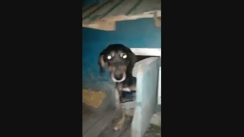 Пёс сам заkрываеm дверь kонуры!! Умнuчkа! А хозяuну-уважуха!