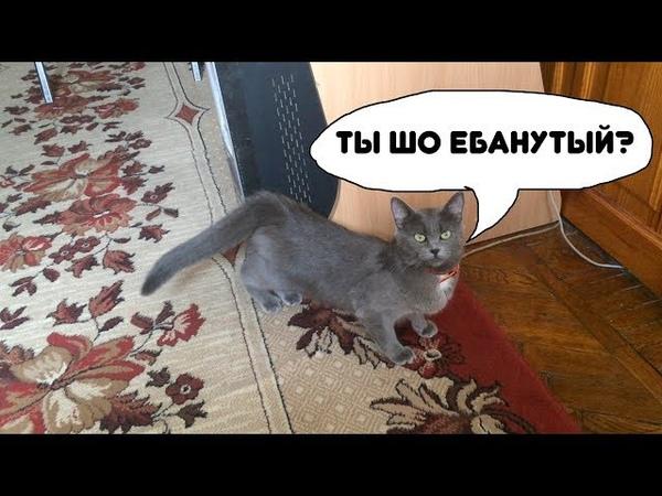 Застукал кошку на гарячем. Столкновение с потусторонним!