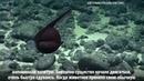 Удивительное глубоководное существо