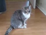 Кот, котик, смешно, мило, кот после наркоза, прикол, до слез :)
