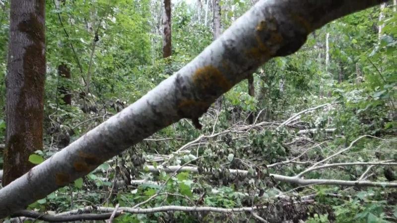 бурелом в парковой зоне города - последствия урагана