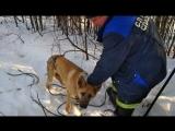 Спасатели вызволили из подвала брошенную хозяином собаку!