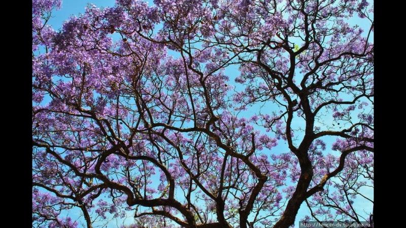 Пьяццолла Весна в Буэнос-айросе