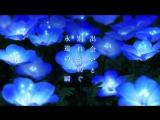 映画『さよならの朝に約束の花をかざろう』特報