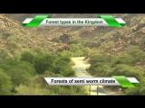 Forests in the Kingdom of Saudi Arabia