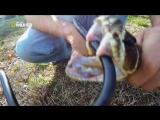 Змея живет после отрезания головы