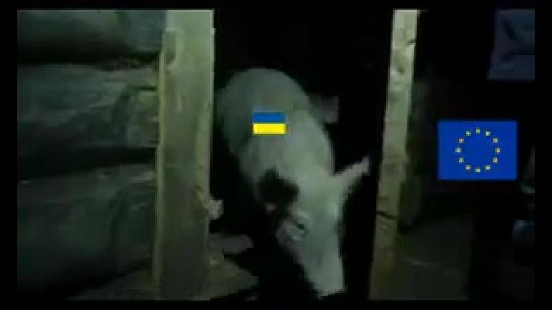 Ukraina chce do unii europejskiej (Украина хочет вступить в Европейский Союз)