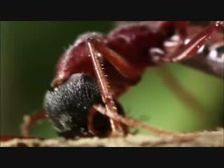 Даже муравьи уповает на Аллаха