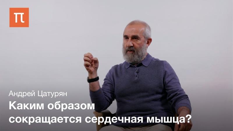 Биомеханика сердечной мышцы Андрей Цатурян bjvt fybrf cthltxyjb̆ vsiws fylhtb̆ wfnehzy