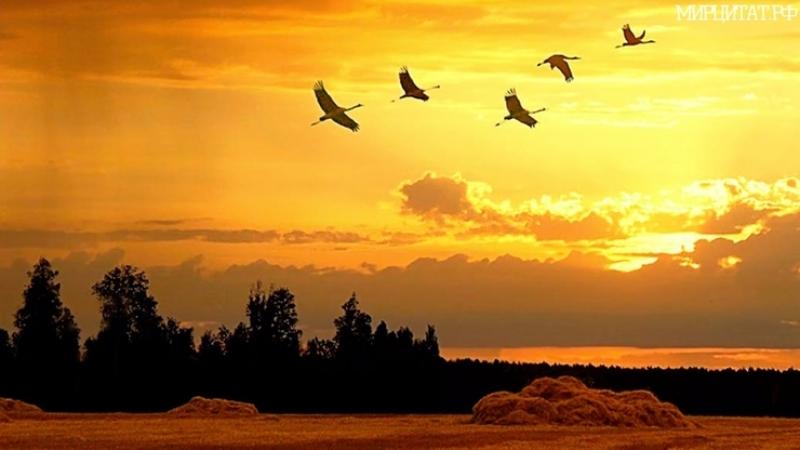Песни военных лет - Летят перелетные птицы (фотоклип).