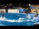 Дельфинарий в Архипо-Осиповке