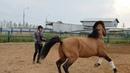 Курс молодой лошади. Как свалить от человека.