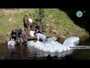 6 000 0000 мальков пеляди выпущены в реку Аанньаах