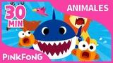 Mejores Canciones de Animales Tibur