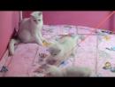Яша - 5 месяцев, Джастин - 4 месяца, Келли - 3,5 месяца, котята продаются