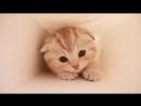 Очень милый котик