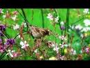 Утреннее пение птиц в лесу. Звуки природы без музыки