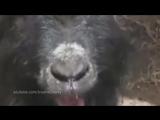 Чики-брики от животных
