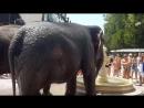 По Евпатории слонов водили!