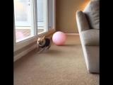 Индиана Джонс- Собачья версия  (6 sec)