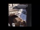 В челябинском зоопарке сняли на видео «весенний танец» медведицы