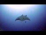 Мальдивы 2015. Удивительный подводный мир. Релакс музыка