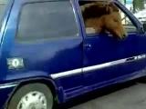 Лошадь в оке!