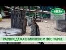 Кого и за сколько можно купить в минском зоопарке