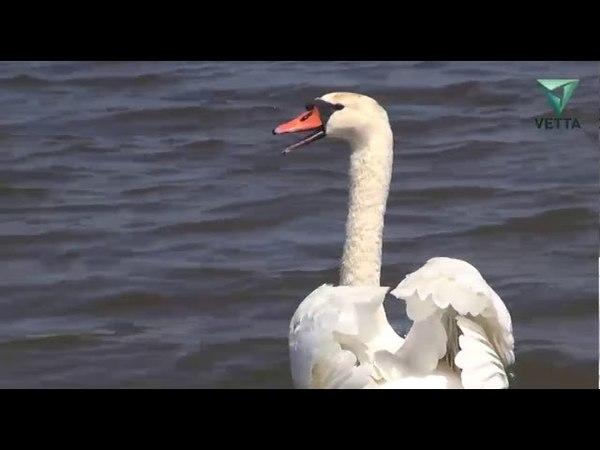 В Прикамье возвращаются перелетные птицы