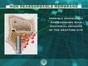 Использование мембран Bioteck