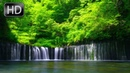 Relaxing River Sounds, Bird Sounds, Forest River, 5 Hours Nature