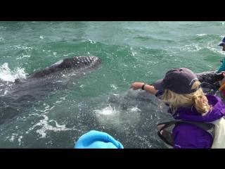 Мамочка кит показывает детенышу людей )))