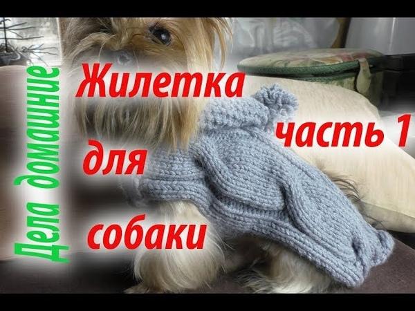 Жилетка для собаки Как связать жилетку для собаки своими руками Часть 1