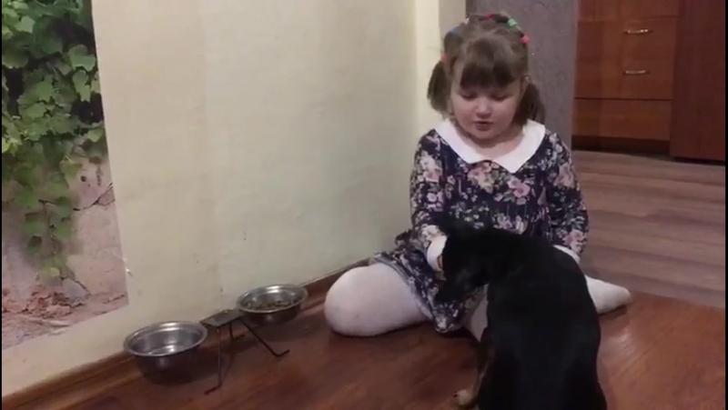Дарина Кузьмина, Я люблю свою собаку конкурс Подари жизнь,МАДОУ № 49 г.Великий Новгород