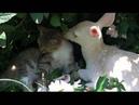 Cat and Deer Friends