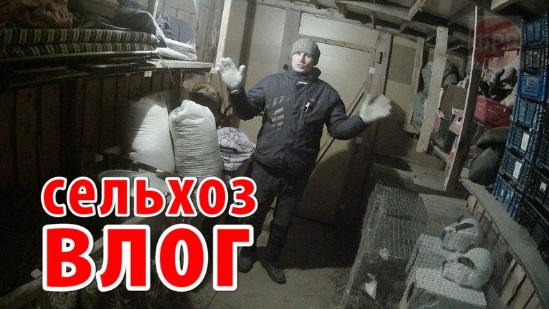 про село - кролики это ценный мех / сельхоз влог / реальная жизнь в русской деревне