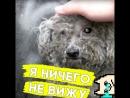 Хозяин выбросил слепую собаку на помойку!