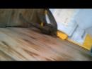 спасение рядового дрозда